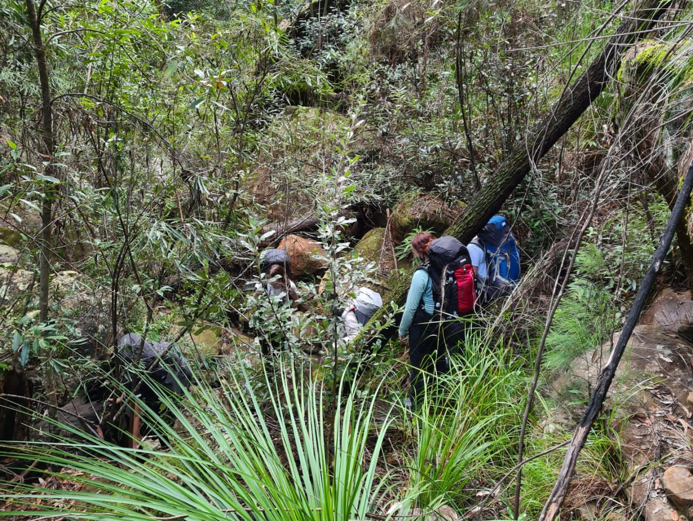 OPEN NSW Gold Prac/Qual Hike Jan 10-13